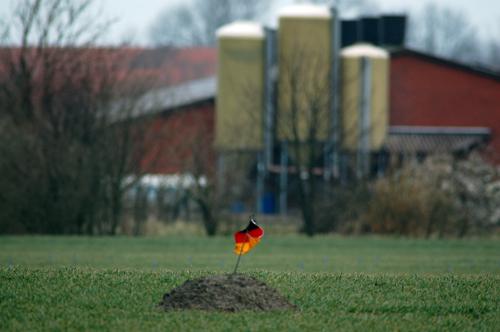"""Gänsescheuche """"Adenauer"""" bei Pilsum/Leybucht Foto: Voß"""