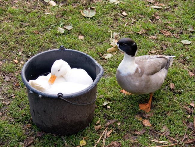 Der Teich ist ausgetrocknet, die einzige Wasserstelle ist besetzt